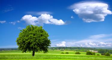"""Ambiente: in G.U. il nuovo """"Testo unico forestale"""""""