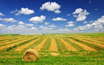 Ici: immobili strumentali all'esercizio dell'attività agricola