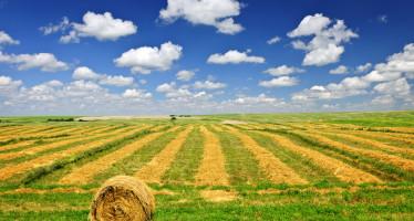 Ici/Imu: istruzioni Mef sulla corretta applicazione dell'esenzione per terreni agricoli nei Comuni soggetti a fusione