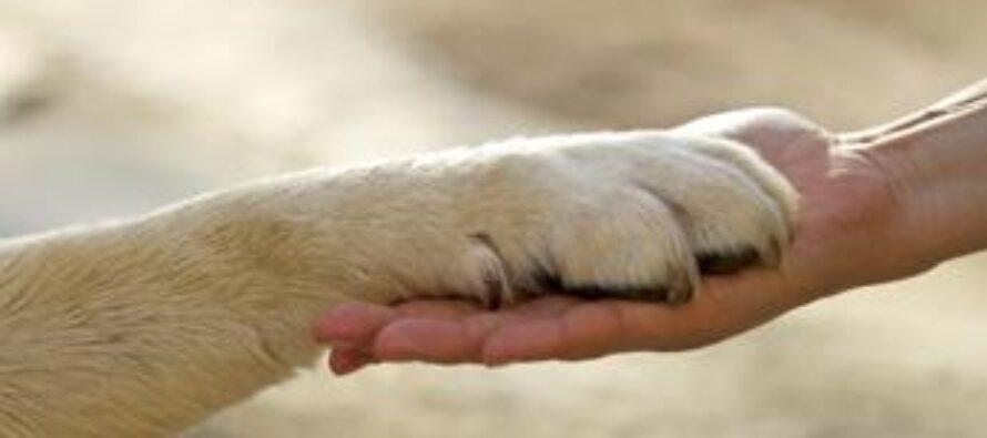 Nel mondo 200 milioni di cani randagi, l'invito ad adottare