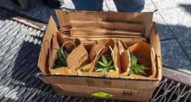 Referendum cannabis, si vota anche con lo Spid