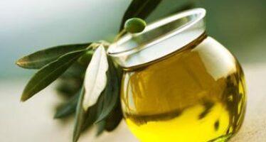 Olio, filiera a raccolta con Evootrends