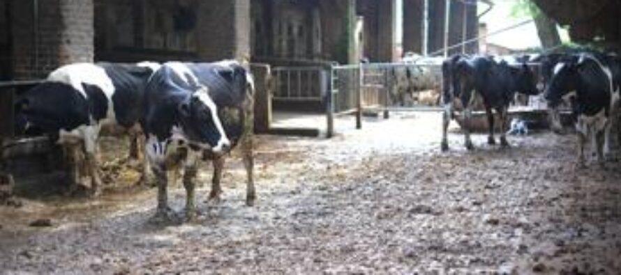 """Allarme produttori latte: """"Le stalle chiudono"""""""