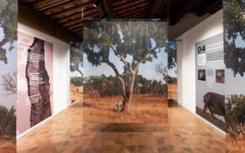 Dalla foresta al design, a Conegliano il sughero racconta le sue mille vite